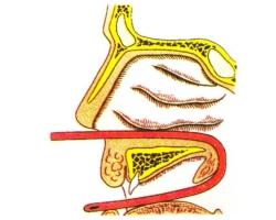 лечение лор-заболеваний носа
